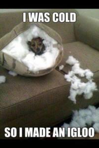 Standard winter behaviour...